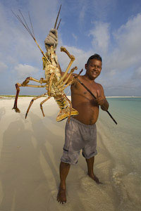 Lobster, Tortuga