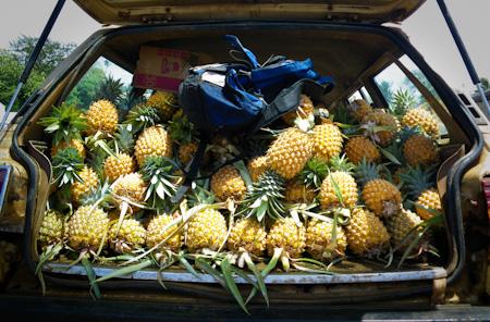 Tonga Pineapples