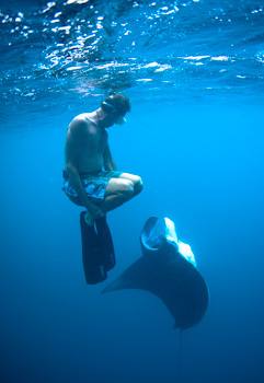 Manta Ray photo, Jody MacDonald