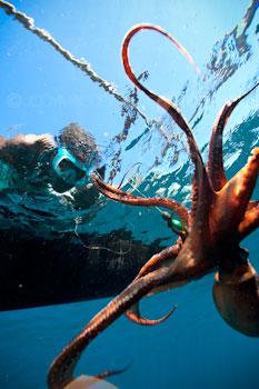 madagascar octopus