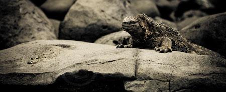 Galapagos Adventures